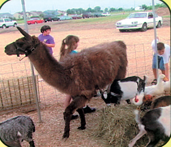 Petting Zoo Rental Awesome Amusements Party Rentals